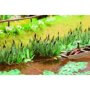 Common reed plants