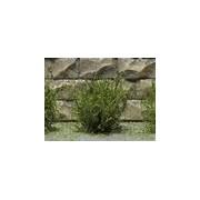 Jeu de 14 arbustes vert savane 15 mm