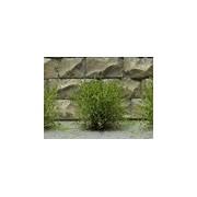 Jeu de 14 arbustes vert bouleau 15 mm