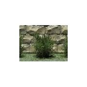Jeu de 14 arbustes vert chêne 15 mm