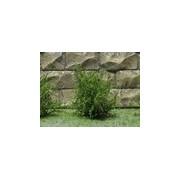 Jeu de 14 arbustes vert peuplier 15 mm