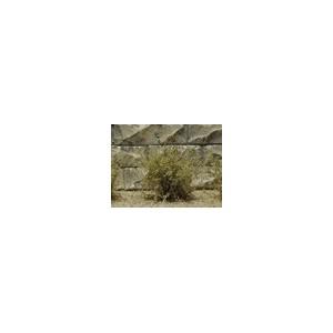 Jeu de 14 arbustes vert ocre 15 mm