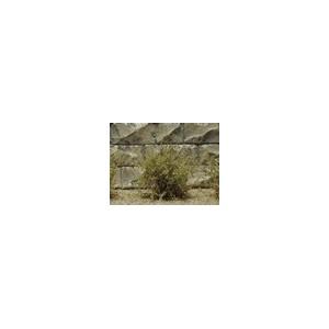 Jeu de 14 arbustes vert chêne sec 15 mm